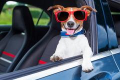 Reise med hund til sverige